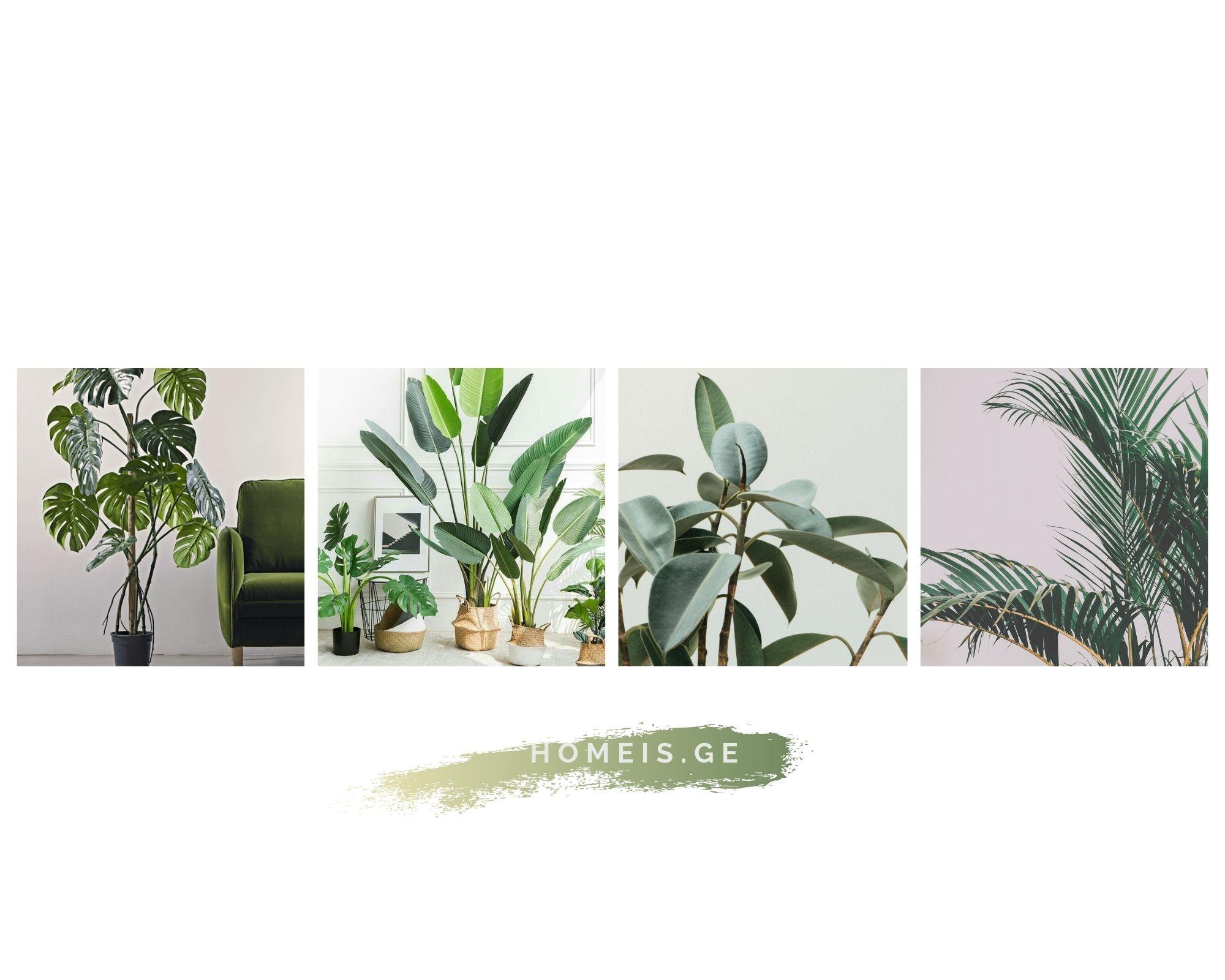 3 ადგილი თბილისში, სადაც ოთახის მცენარეებს დისტანციურად შეიძენთ
